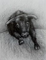 Büffel, 2020, Bleistift, 36x27 cm